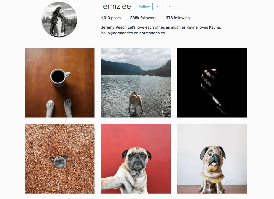 Celebrity Instagram pets