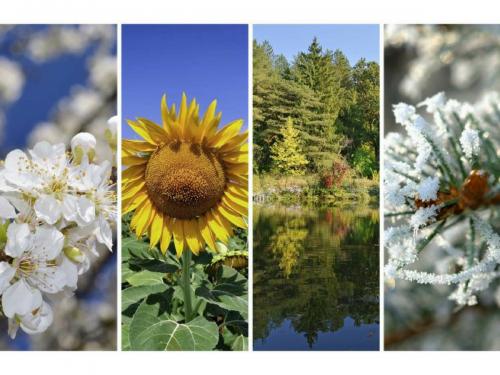 autumn, fall, quiz, seasons, social media quiz, spring, summer, what season am i, winter